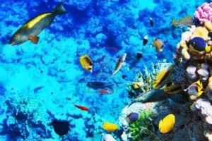 16256305-coral-and-fish-in-the-red-sea-egypt-africa