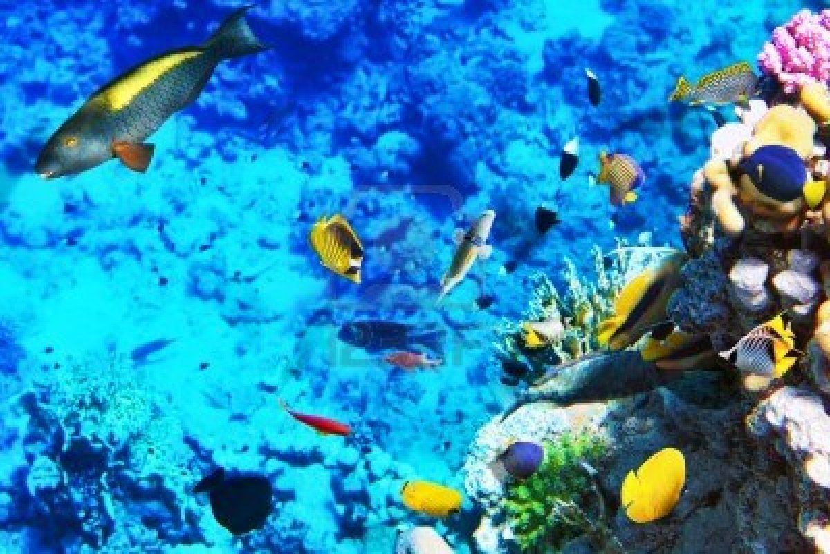 Egypt 39 s red sea is teaming with wildlife for Types of red fish